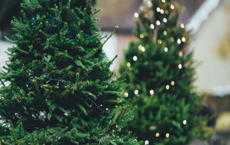 Real vs. Artificial Trees for Christmas